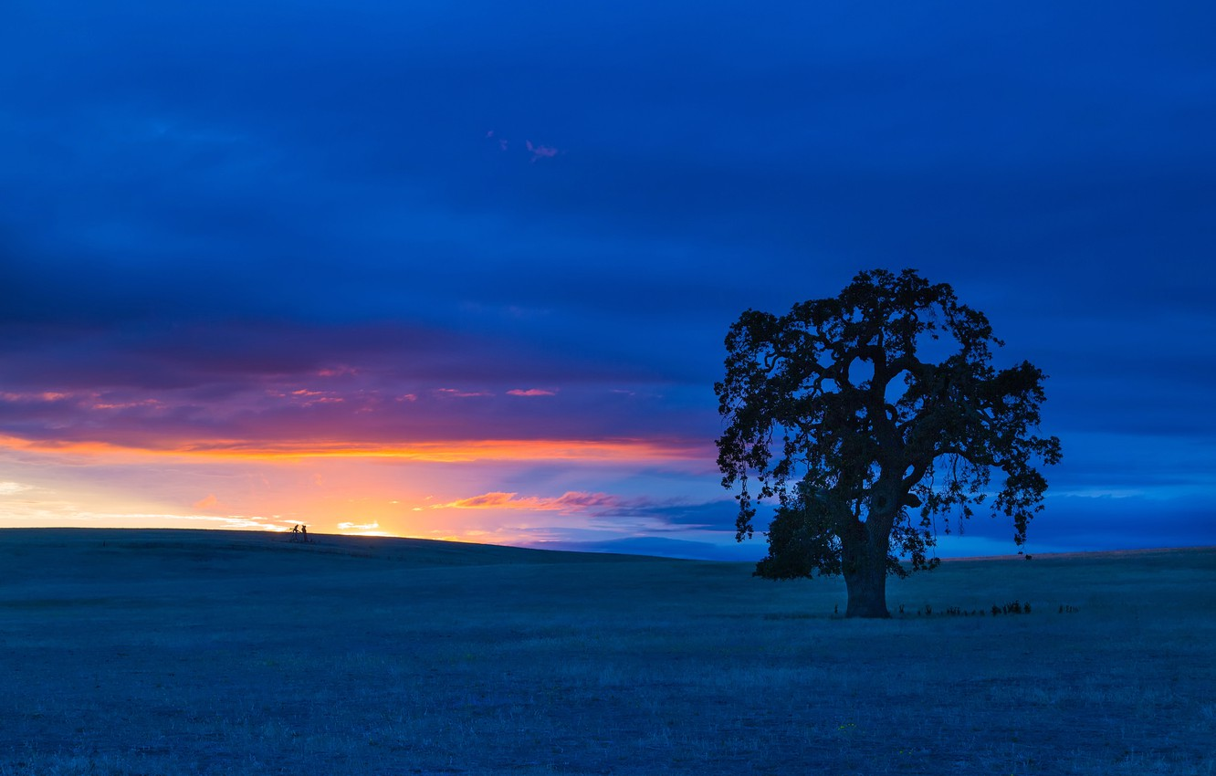 Photo wallpaper field, the sky, clouds, landscape, tree, hills, the evening, glow