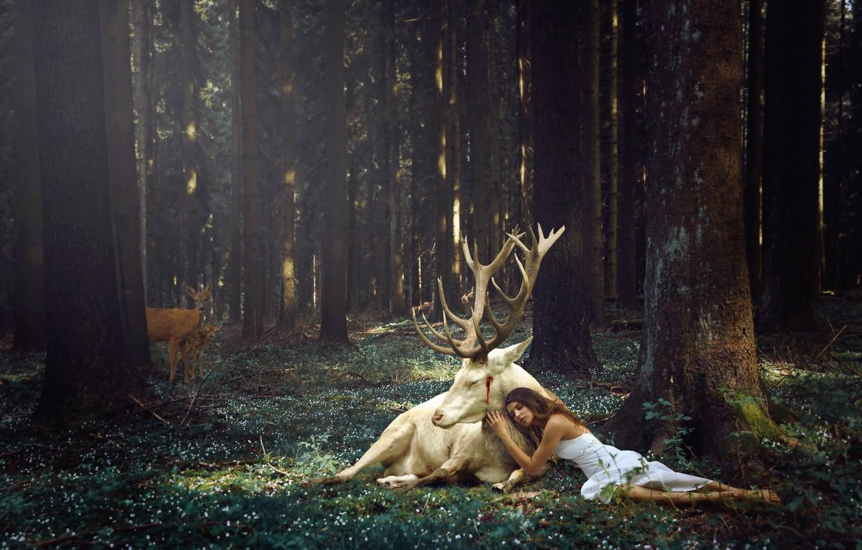 Photo wallpaper forest, girl, deer