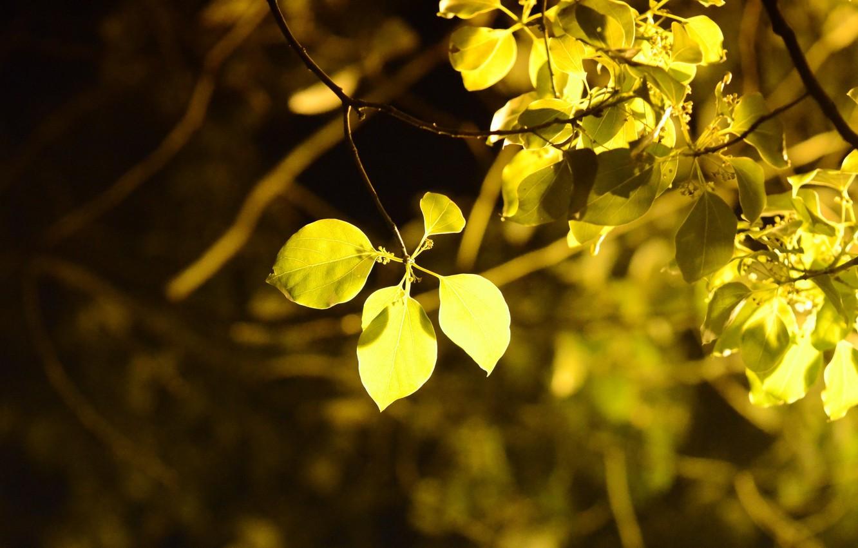 Photo wallpaper leaves, macro, trees, yellow, background, tree, widescreen, Wallpaper, foliage, blur, leaf, wallpaper, leaf, widescreen, background, ...