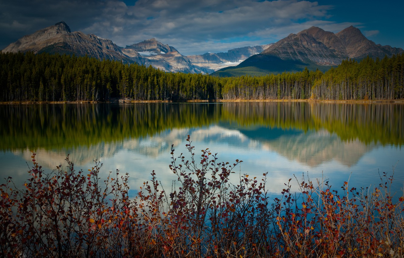Photo wallpaper forest, mountains, lake, reflection, Canada, the bushes