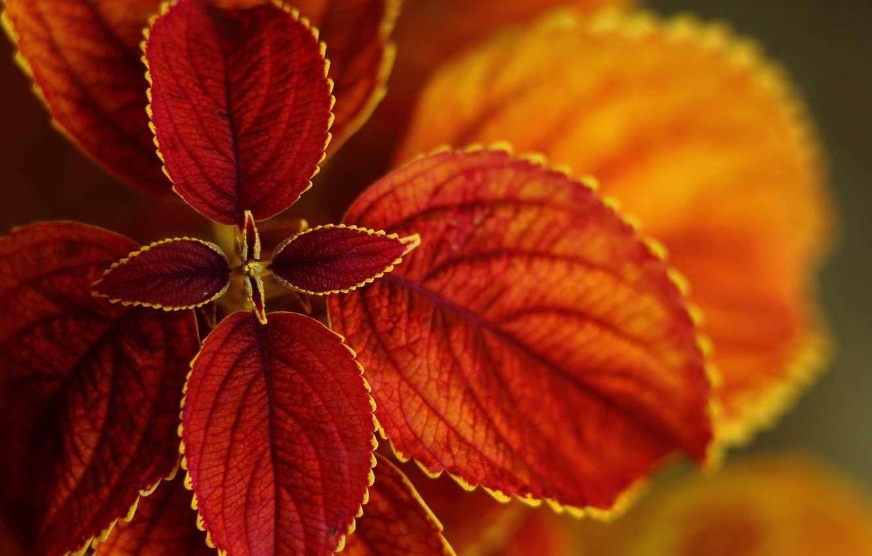 Photo wallpaper autumn, leaves, Bush