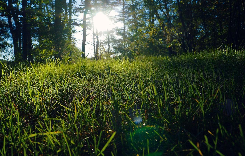 Photo wallpaper summer, grass, nature, glade