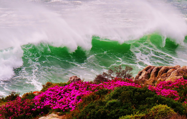Photo wallpaper sea, wave, flowers, storm, rock, shore