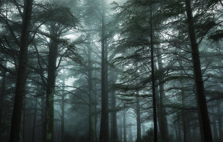 Photo wallpaper greens, forest, trees, fog, France, moss, Nikon, haze, Green, Tree, France, Mist, Provence, Fog, Mood, …