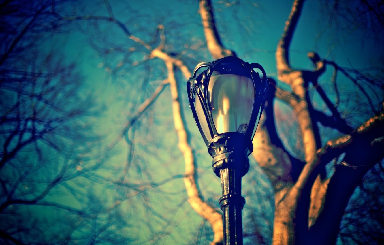 Photo wallpaper the sky, macro, branches, tree, street, blue, blur, lantern, trunk