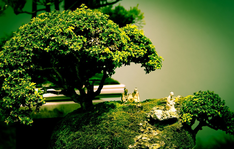 Photo wallpaper tree, bonsai, art, figure, composition