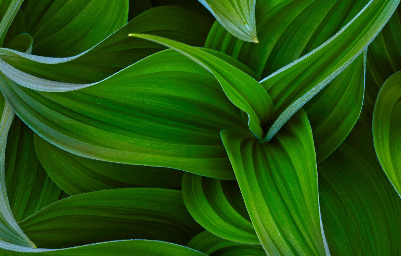 Photo wallpaper HTC, Original, HTC Sense, Curves of green
