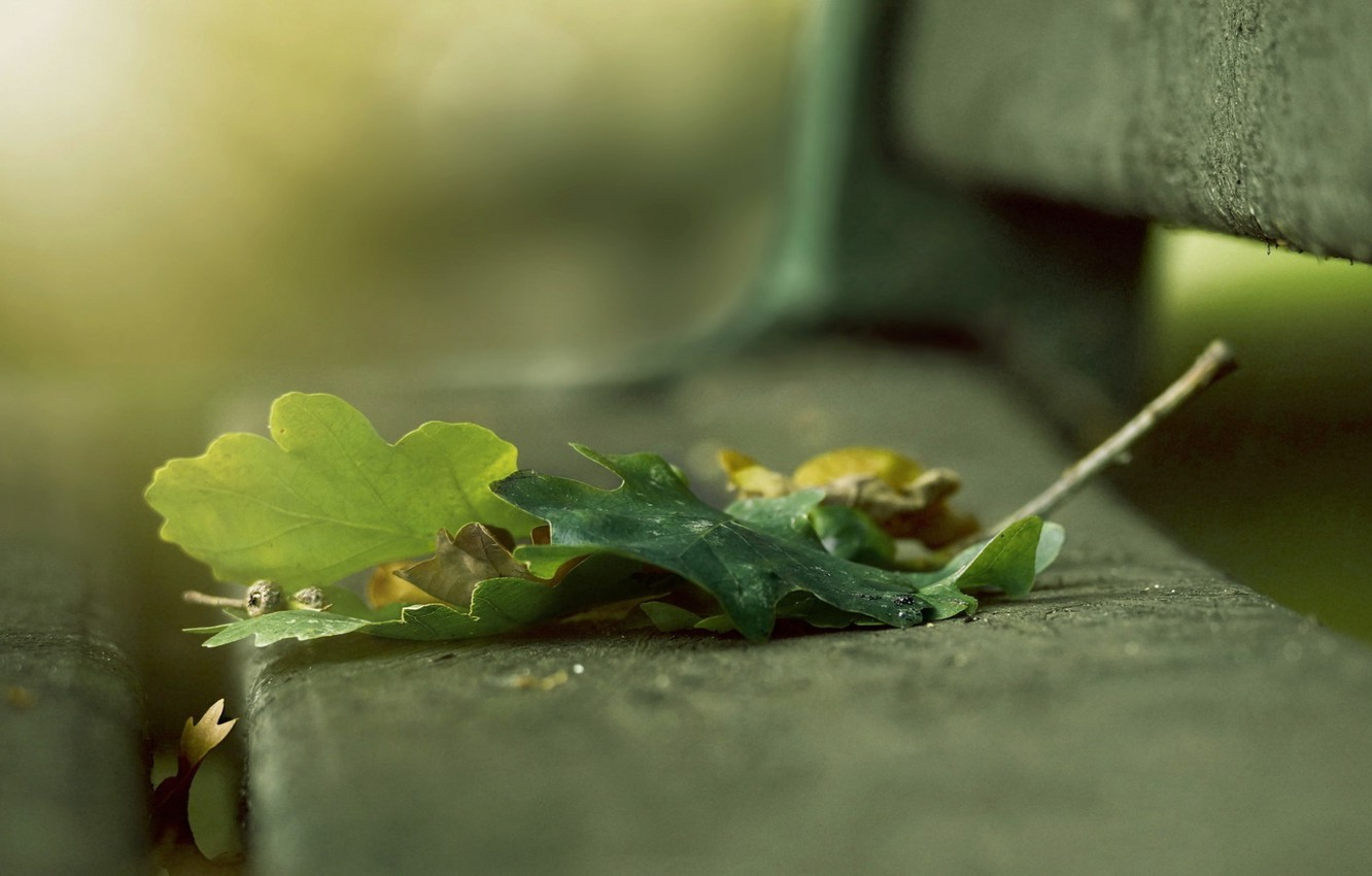 Photo wallpaper bench, blur, Leaves, bobovye