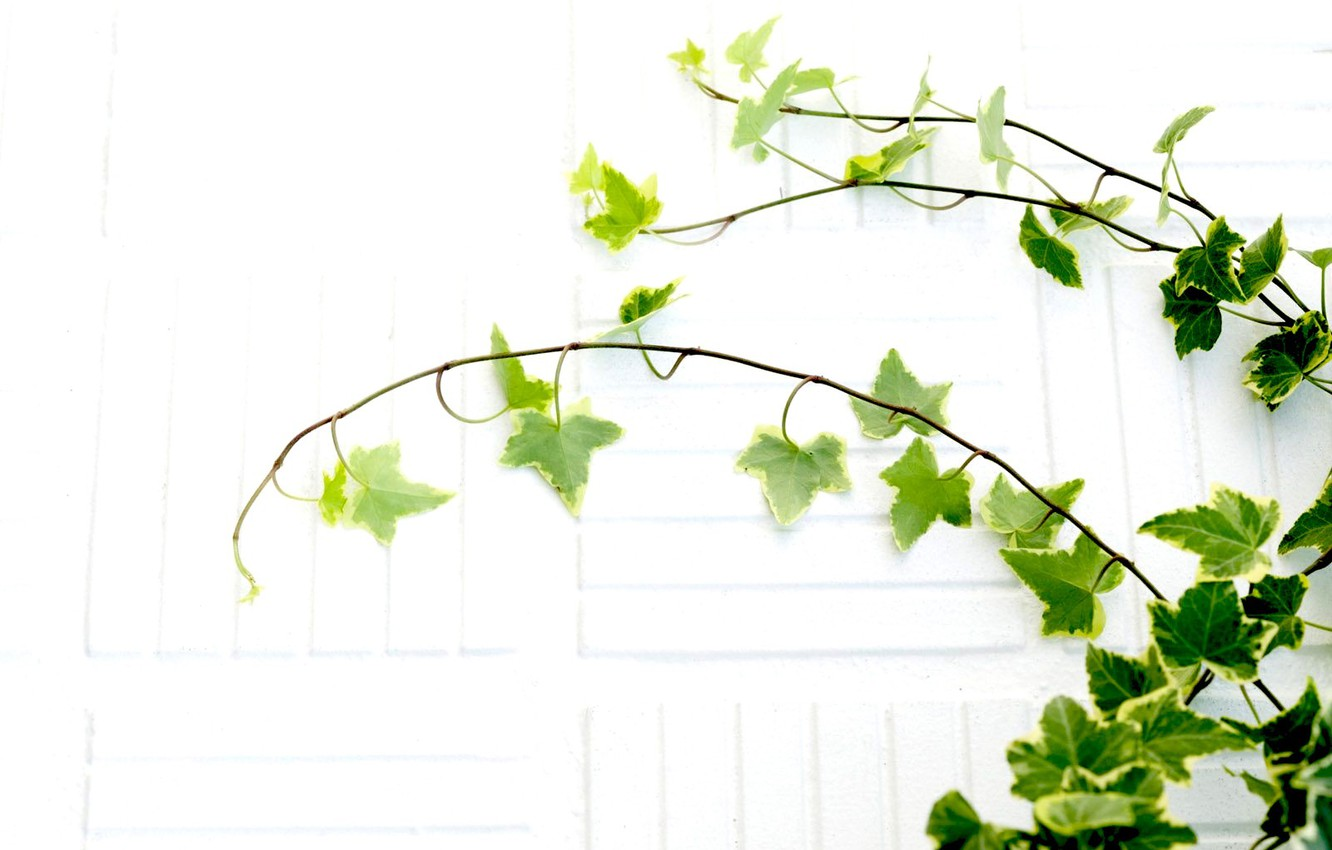 Photo wallpaper white, leaves, branches, plant