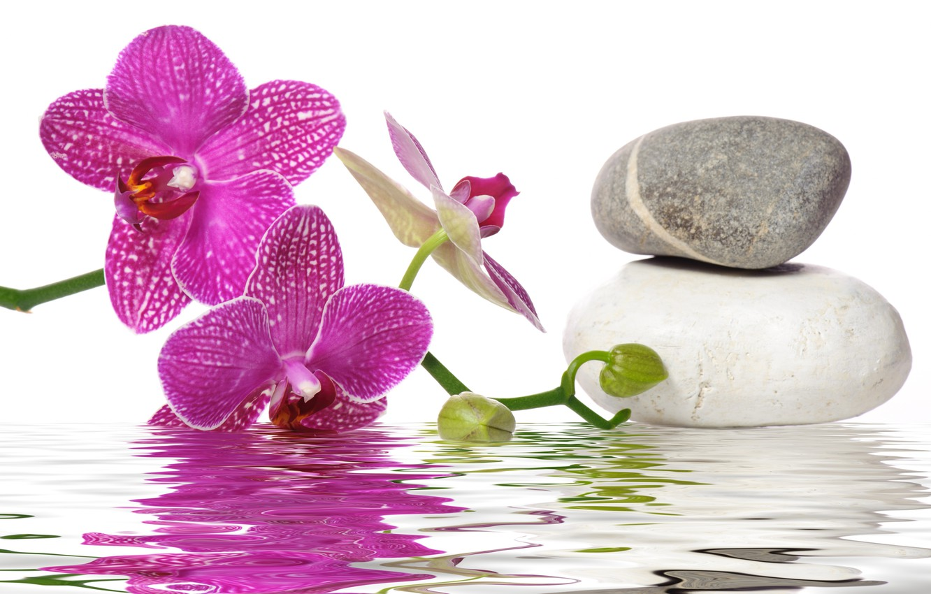 Photo wallpaper water, flowers, Orchid, Spa stones