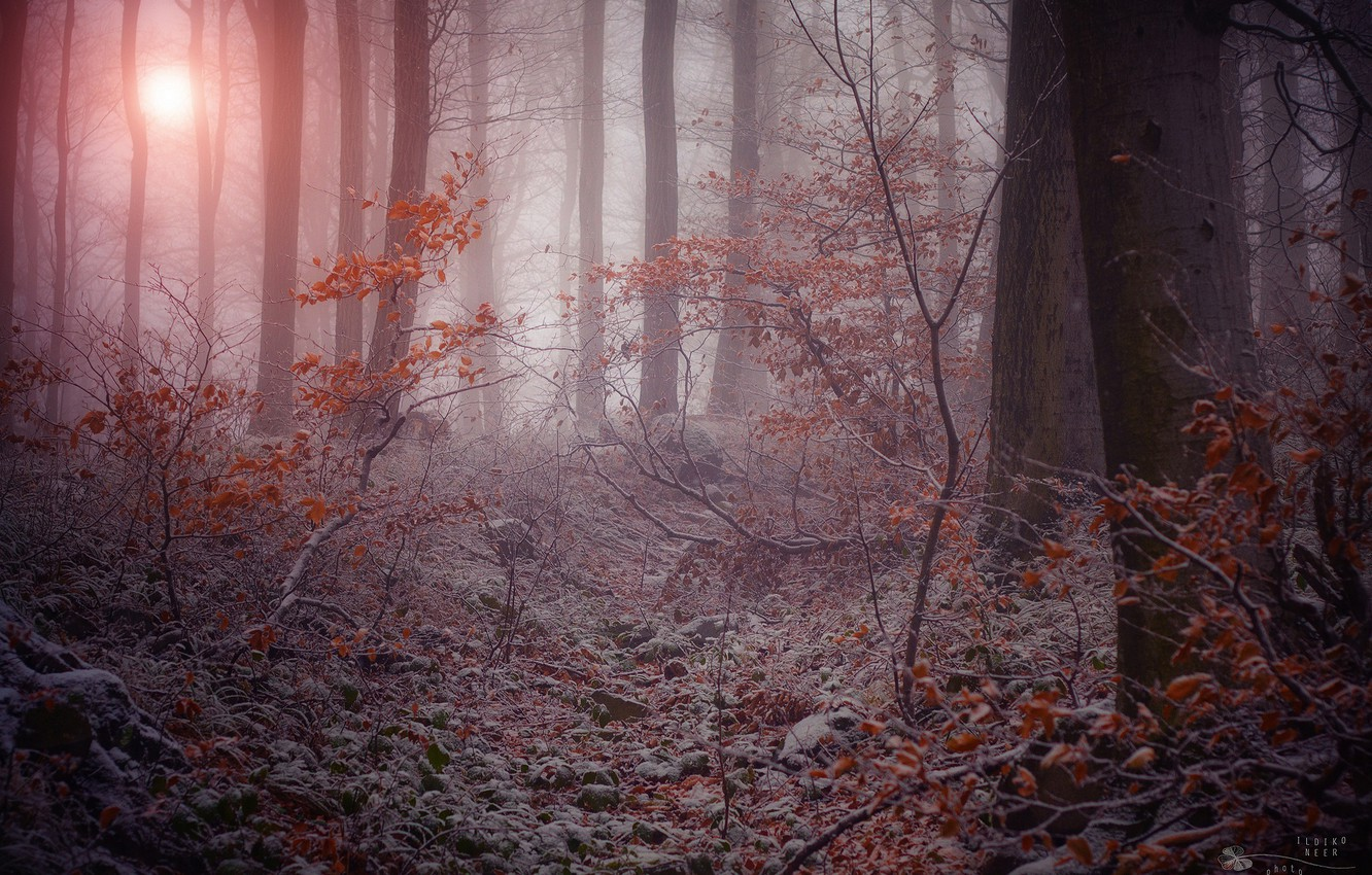 Photo wallpaper winter, frost, trees, branches, nature, fog, gloomy forest, the dry leaves
