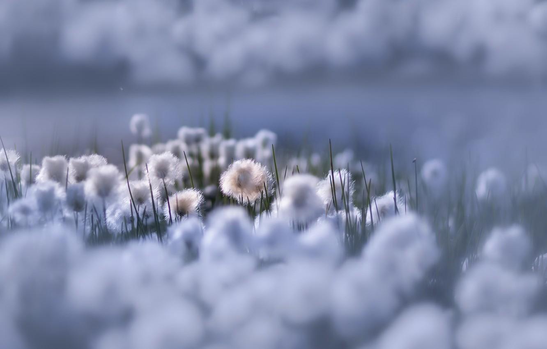 Photo wallpaper flowers, nature, beauty, Flowers of Heaven
