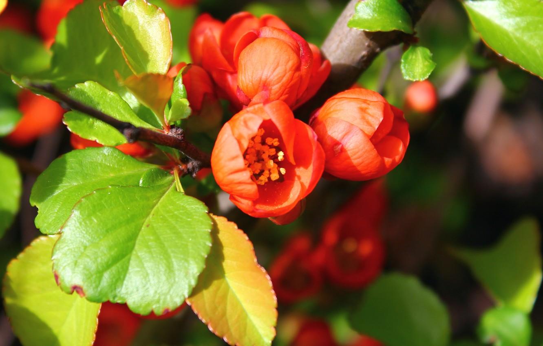 Photo wallpaper Orange, green, flowering