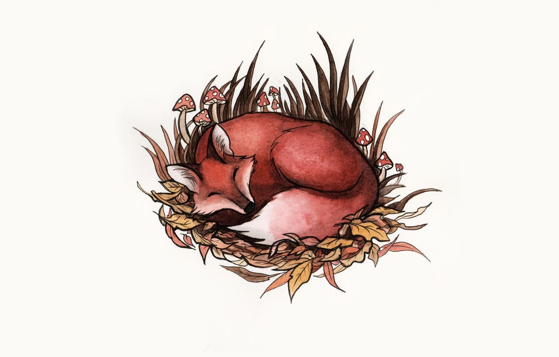 Photo wallpaper grass, animal, mushrooms, sleep, art, Fox, fox