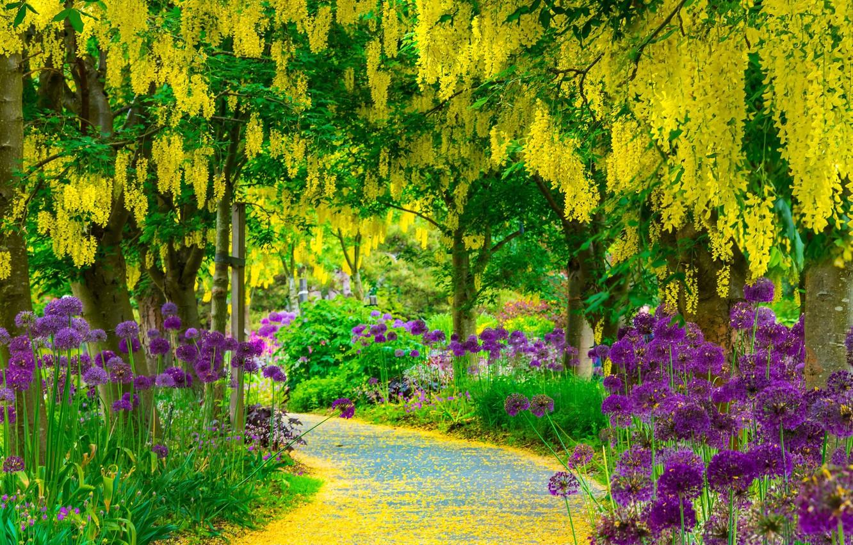 Photo wallpaper road, summer, trees, flowers, Park, Landscapes