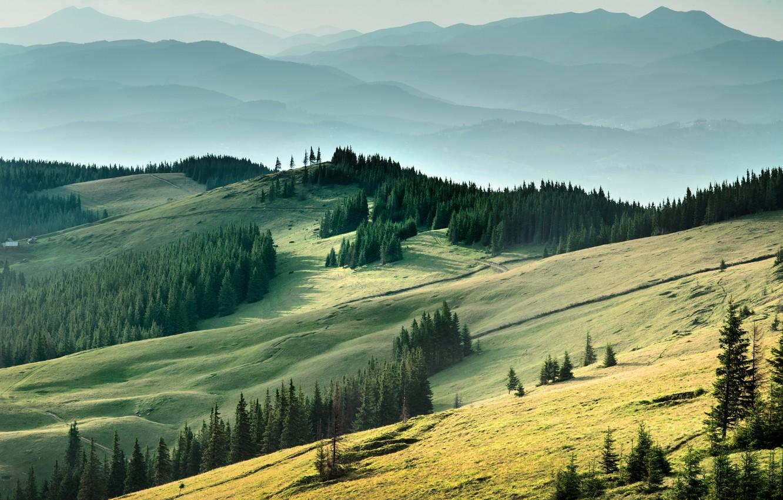 Photo wallpaper mountains, field, Ukraine, forest, Carpathians