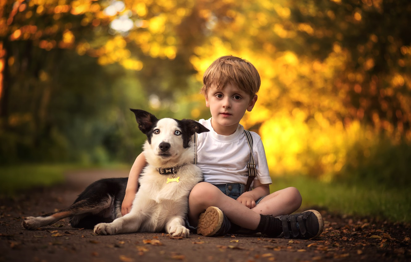 Photo wallpaper dog, boy, friendship, friends, the border collie