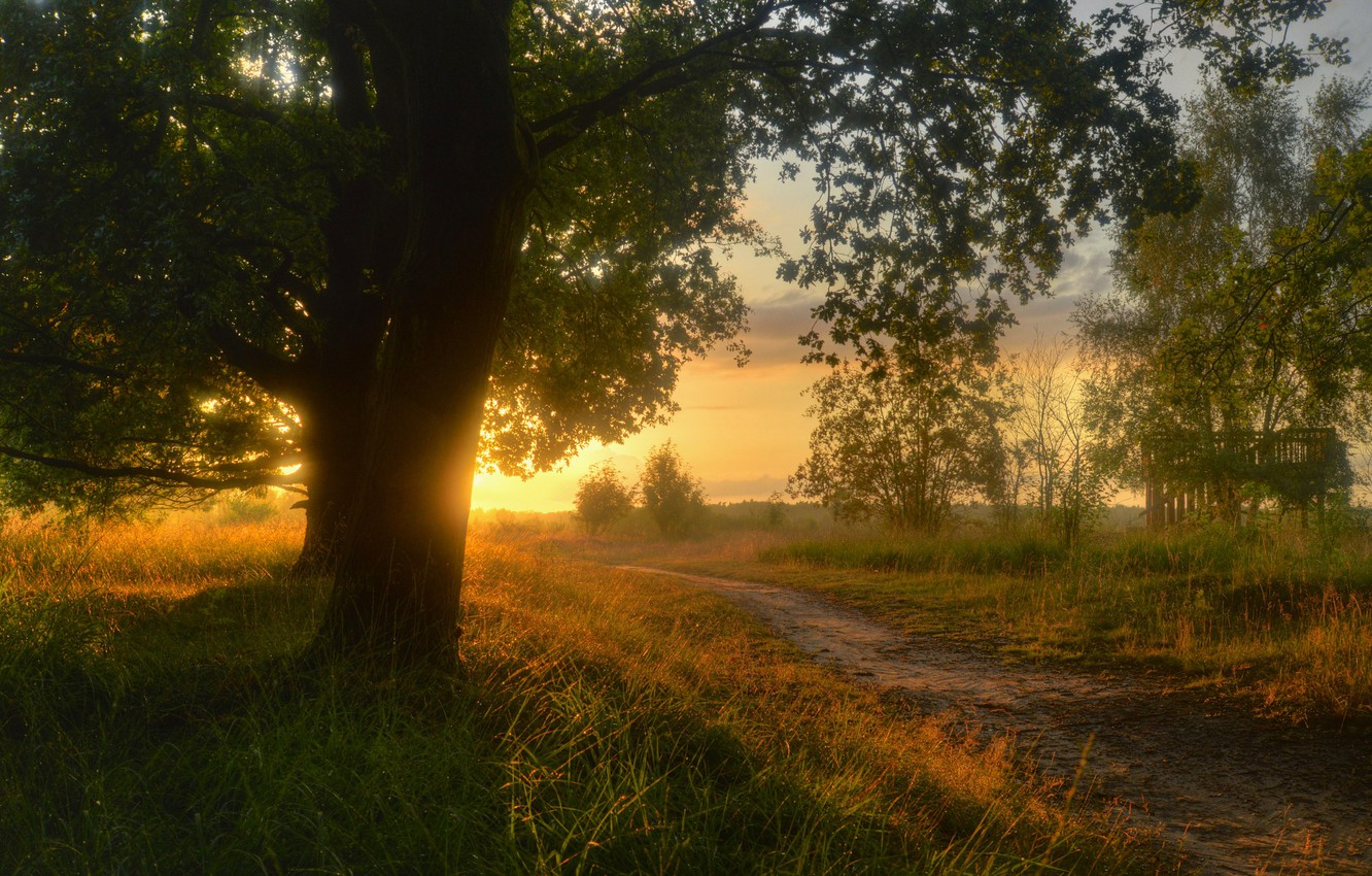 Photo wallpaper road, grass, the sun, trees, landscape, sunset, nature, trail, the evening, Germany, path, the countryside, ...