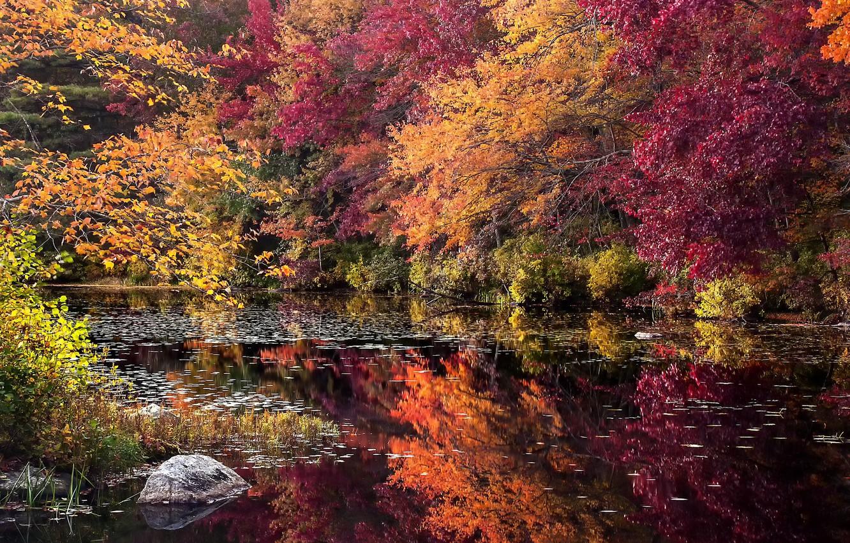 Photo wallpaper autumn, forest, trees, lake, stone