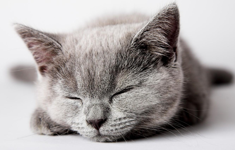 Photo wallpaper cat, cat, kitty, grey, sleeping, kitten, cat