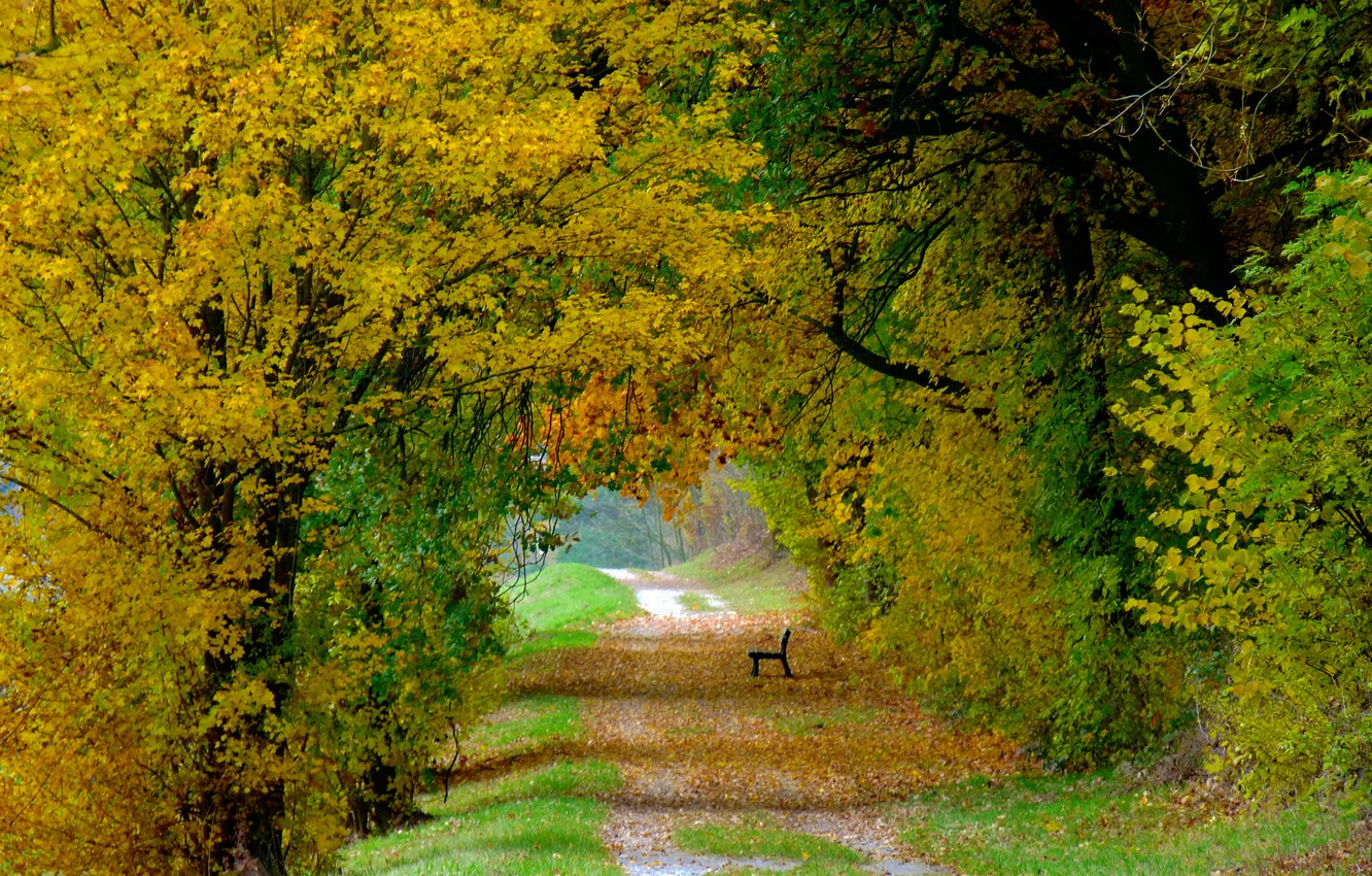 Photo wallpaper autumn, leaves, trees, bench, nature, colorful, track, falling leaves, trees, nature, Autumn, leaves, path