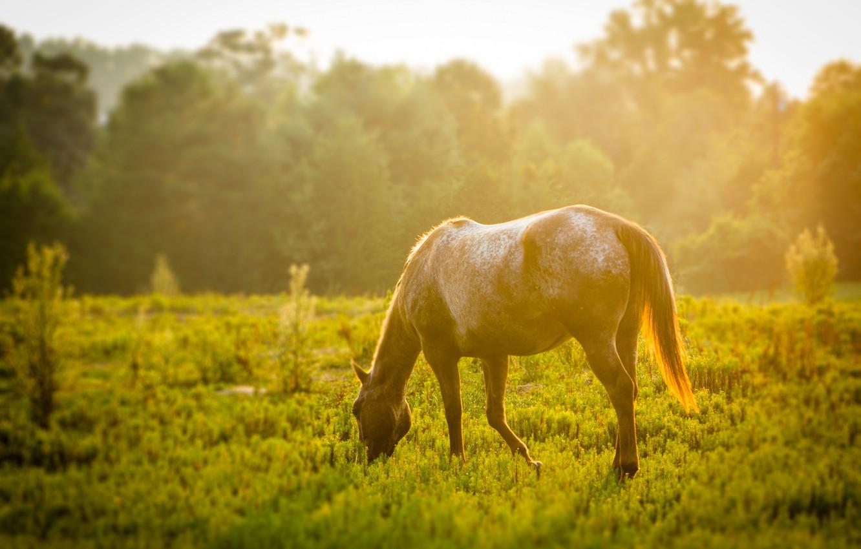 Photo wallpaper greens, animals, grass, leaves, the sun, trees, tree, horse, widescreen, Wallpaper, foliage, horse, meadow, wallpaper, ...