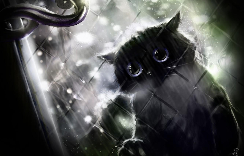 Photo wallpaper rain, window, handle, black cat