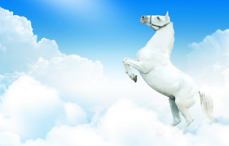 Wallpaper White The Sky Clouds Fantasy Horse Horse Images For Desktop Section Zhivotnye Download