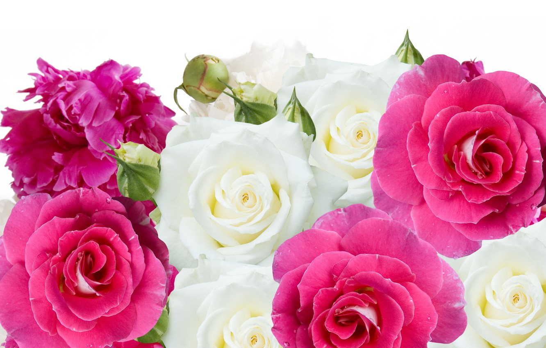 Photo wallpaper flowers, roses, buds, peonies