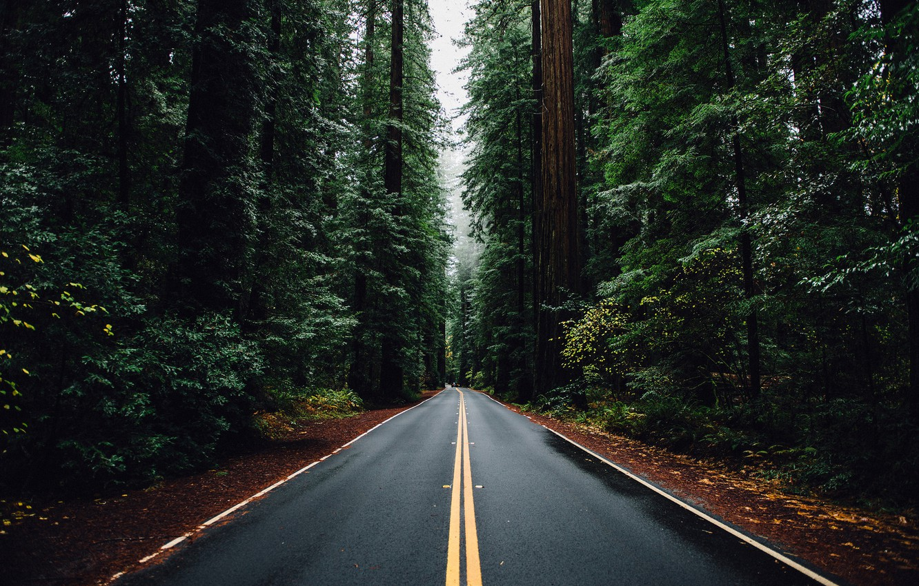 Photo wallpaper road, machine, forest, trees, Nature