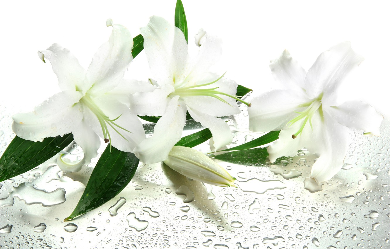Photo wallpaper water, flowers, droplets, leaves, white lilies