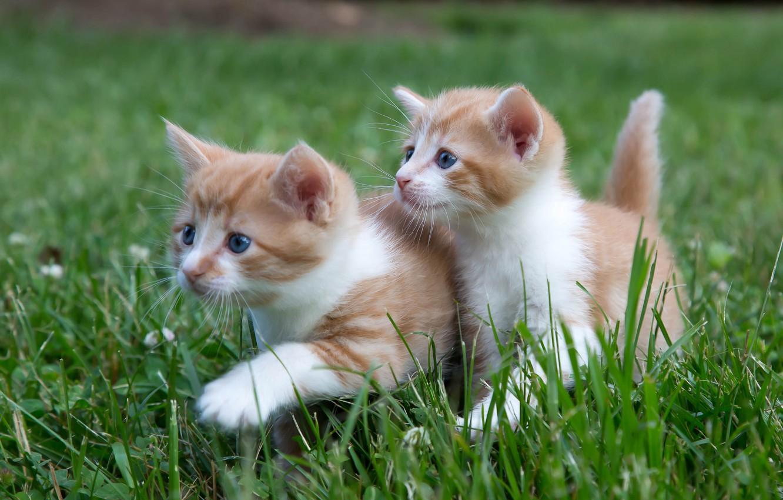 Photo wallpaper grass, kittens, walk, kids, a couple, twins