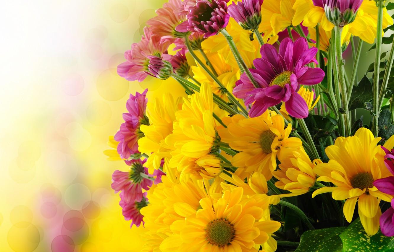 Photo wallpaper flowers, petals, bokeh