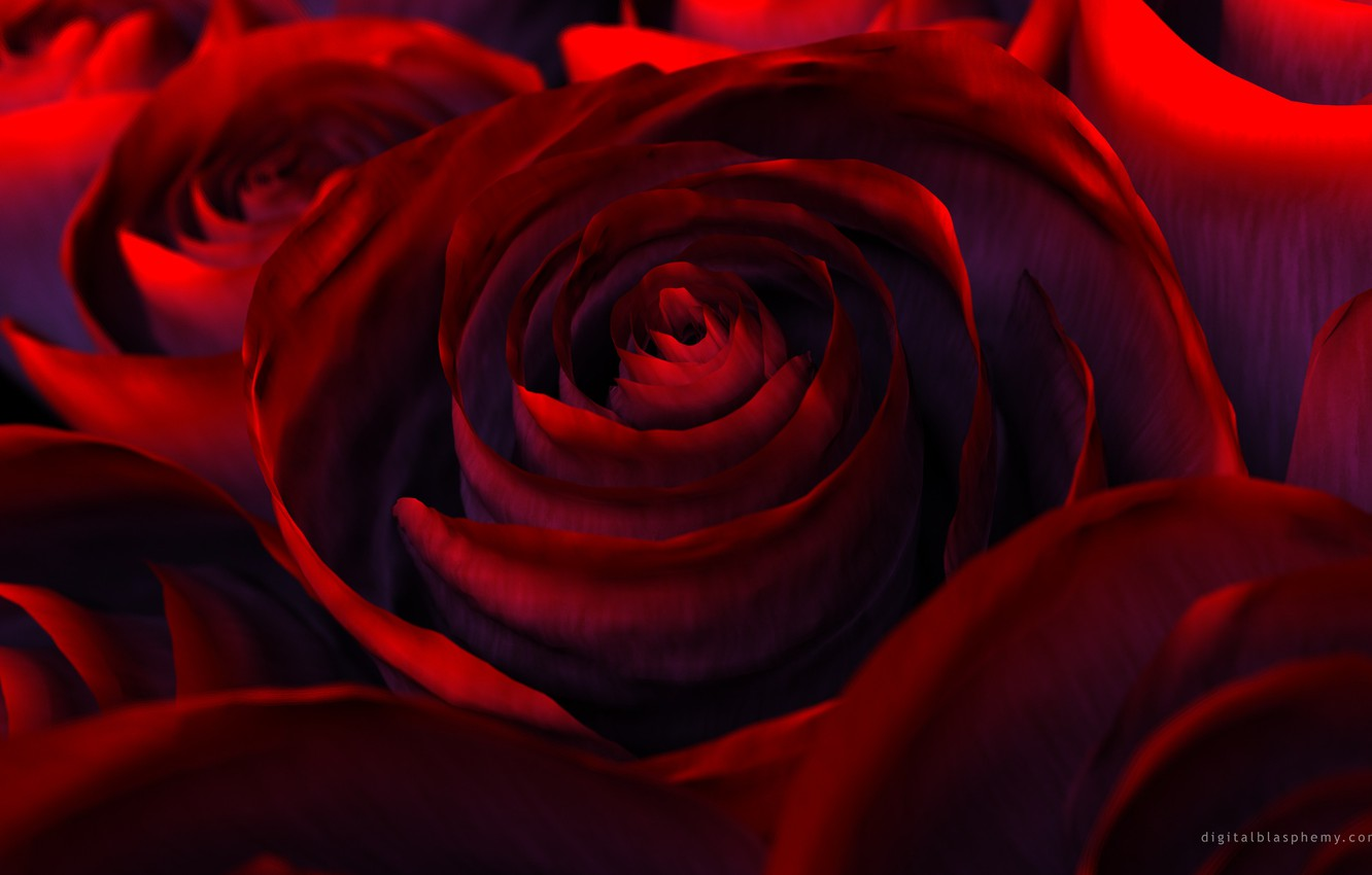 Photo wallpaper flowers, rendering, rose, beauty, petals, red, red, flower, Rose, beautiful nature wallpapers