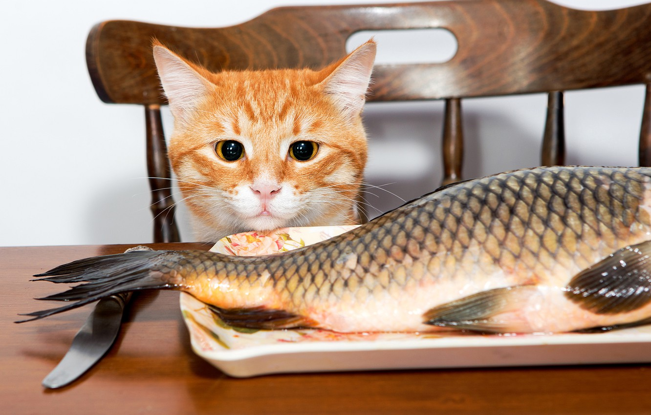 Photo wallpaper cat, table, fish, red, chair, knife