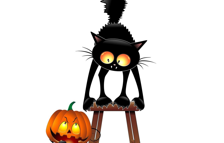 Photo wallpaper cat, humor, pumpkin