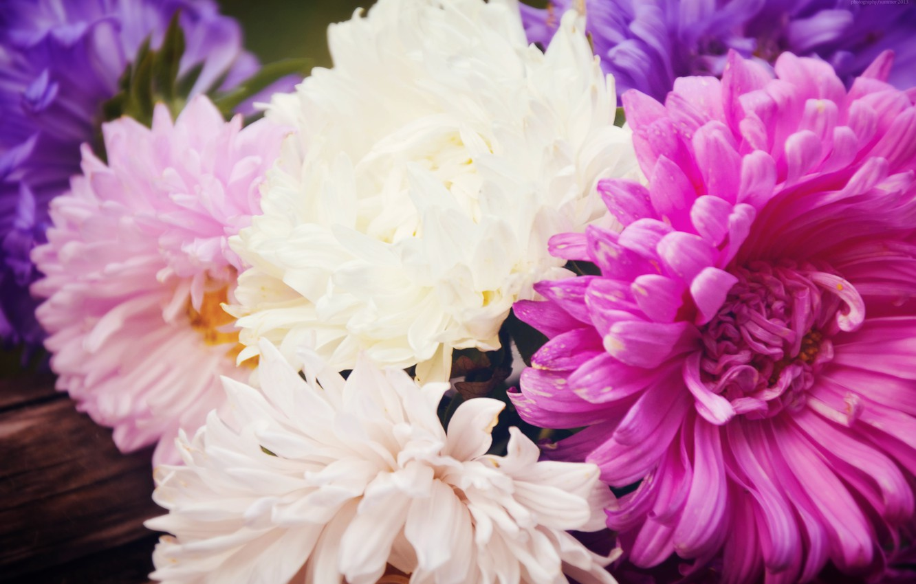Photo wallpaper summer, macro, landscape, flowers, nature, photo, cute, beautiful, summer, flowers, cottage, asters