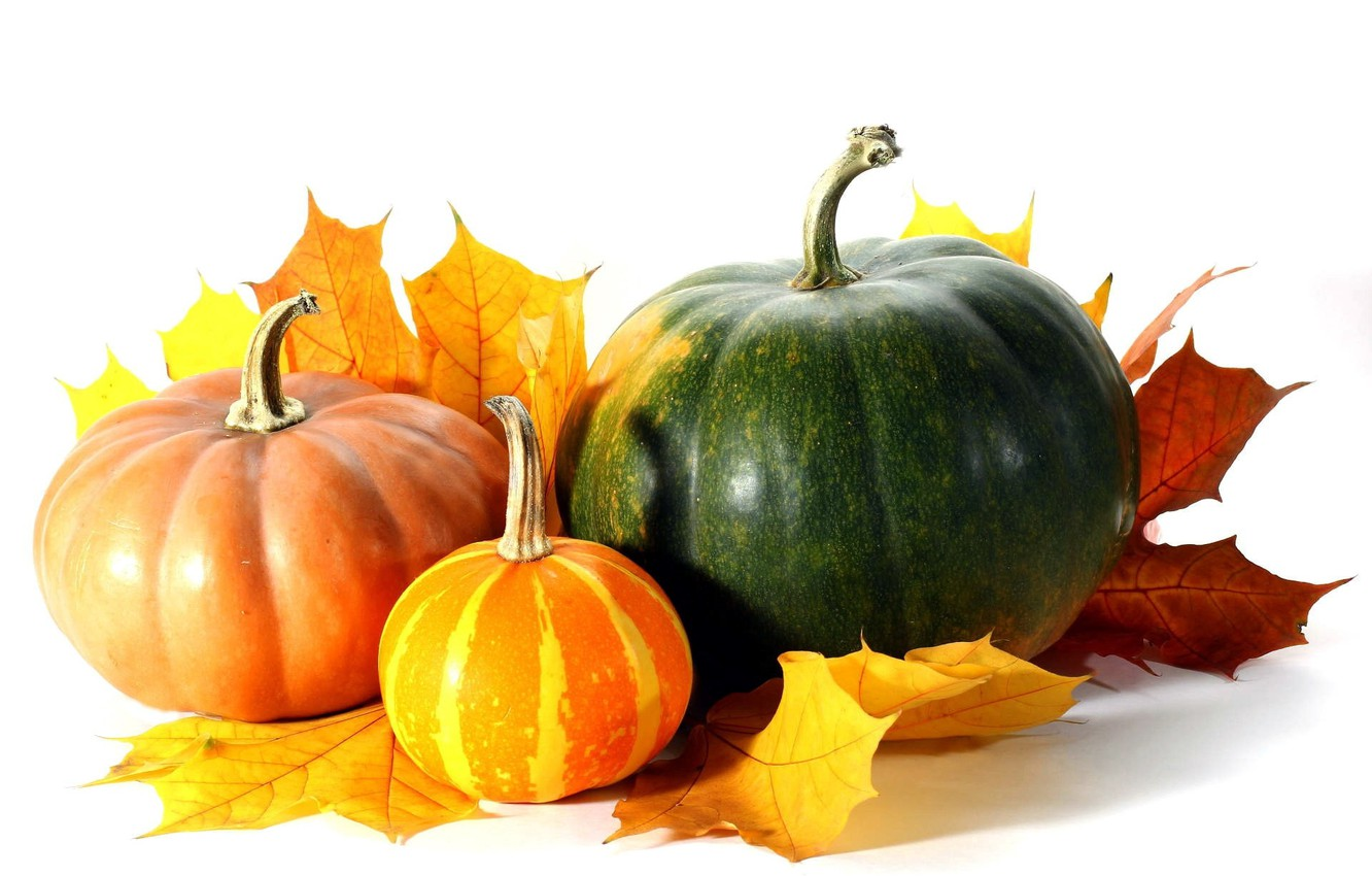 Wallpaper Autumn Leaves White Background Pumpkin Images