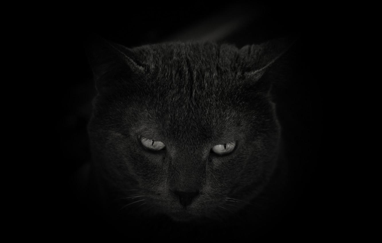 Photo wallpaper eyes, cat, look, background, Koshak
