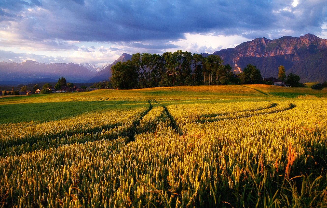 Photo wallpaper field, the sky, mountains, Alps