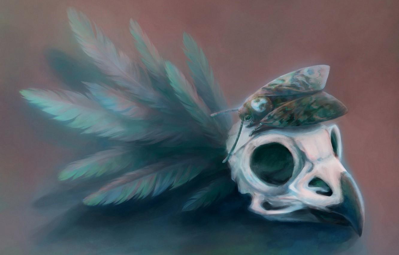Photo wallpaper butterfly, skull, feathers, beak, art