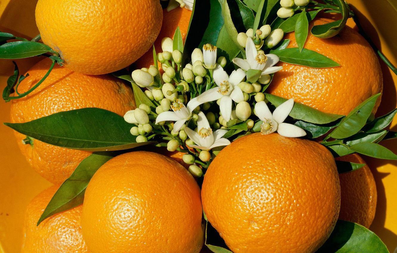 Photo wallpaper flowers, orange, fruit