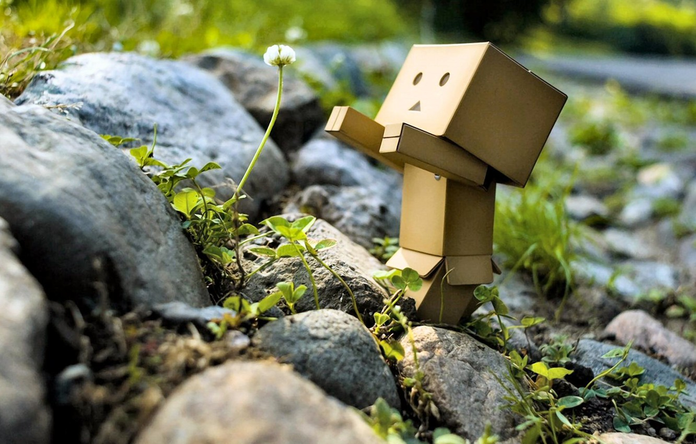 Photo wallpaper greens, flower, nature, stones, robot, danbo, Danboard, box, toy, Oduvanchik, flower