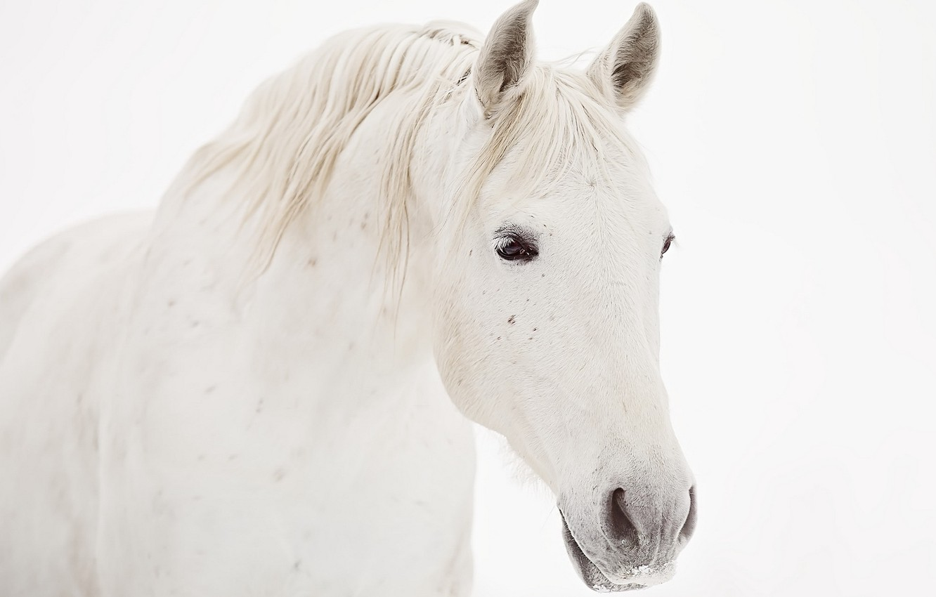 Photo wallpaper face, background, horse