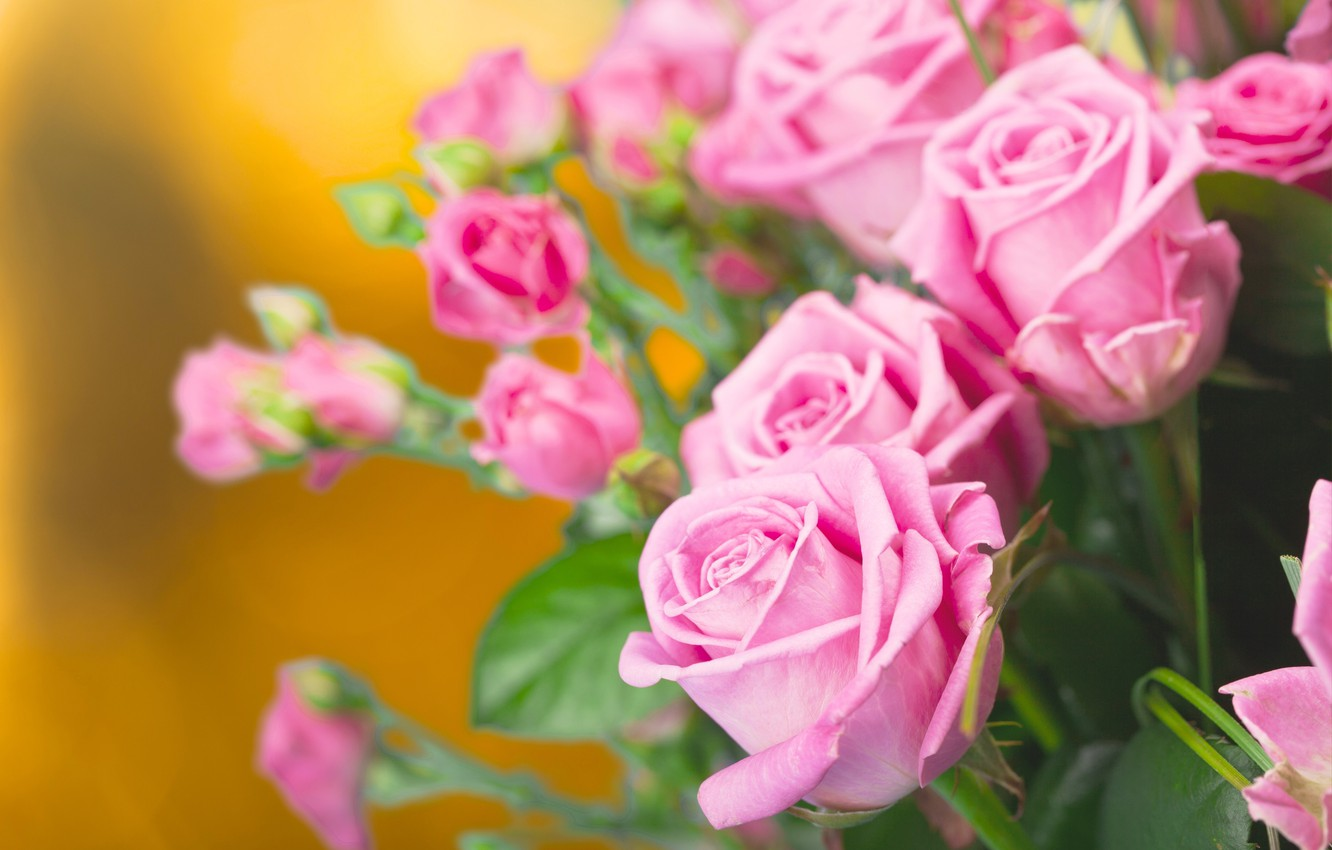 Photo wallpaper roses, bouquet, buds
