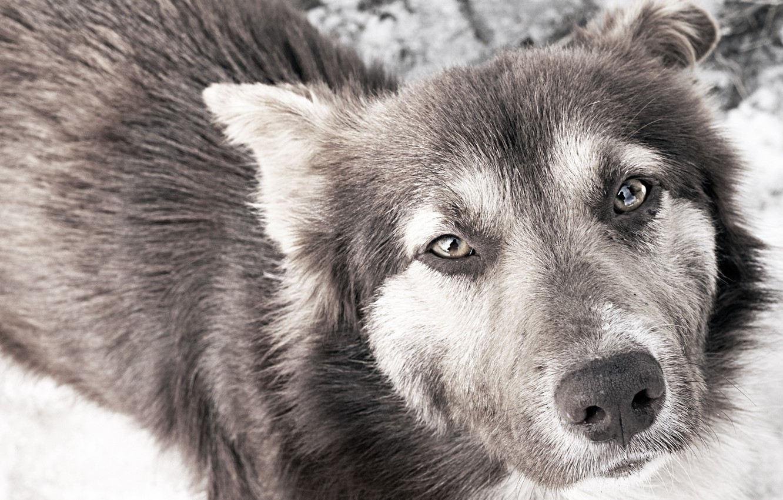 Photo wallpaper sadness, eyes, dog
