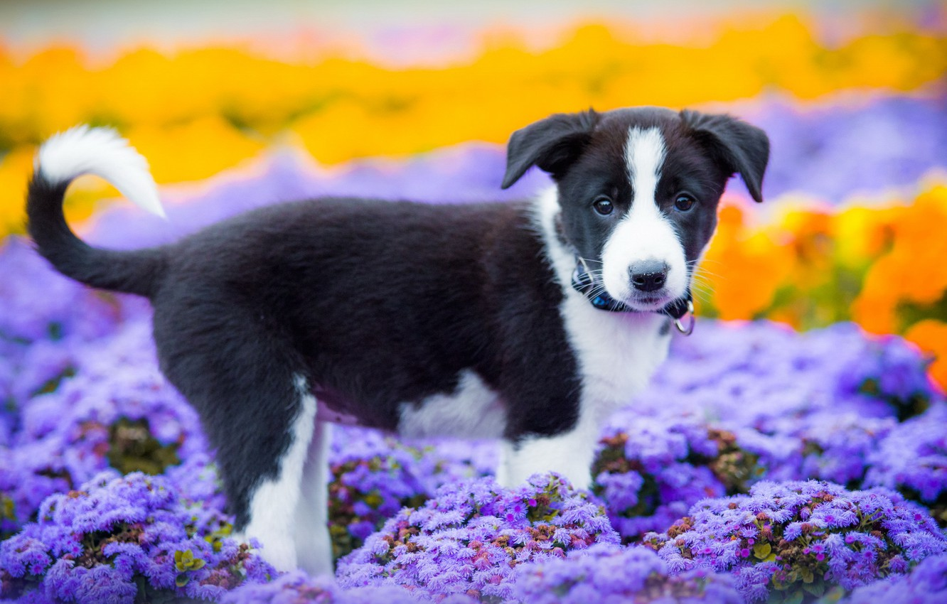 Wallpaper Summer Look Each Dog Puppy Images For Desktop Section Sobaki Download