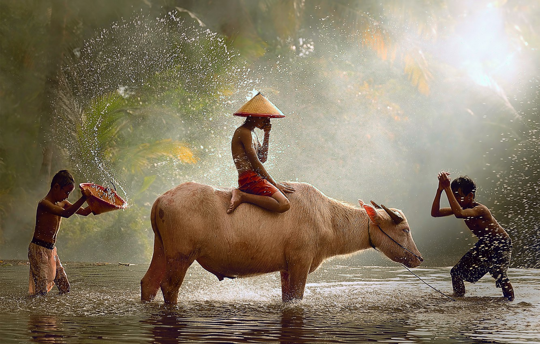 Photo wallpaper drops, light, children, the game, Indonesia, Java, the splashes of water, bull