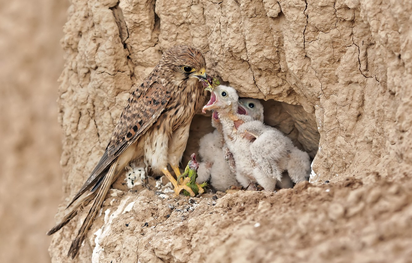 Photo wallpaper birds, nature, beauty, predator, food, socket, Chicks, lizard