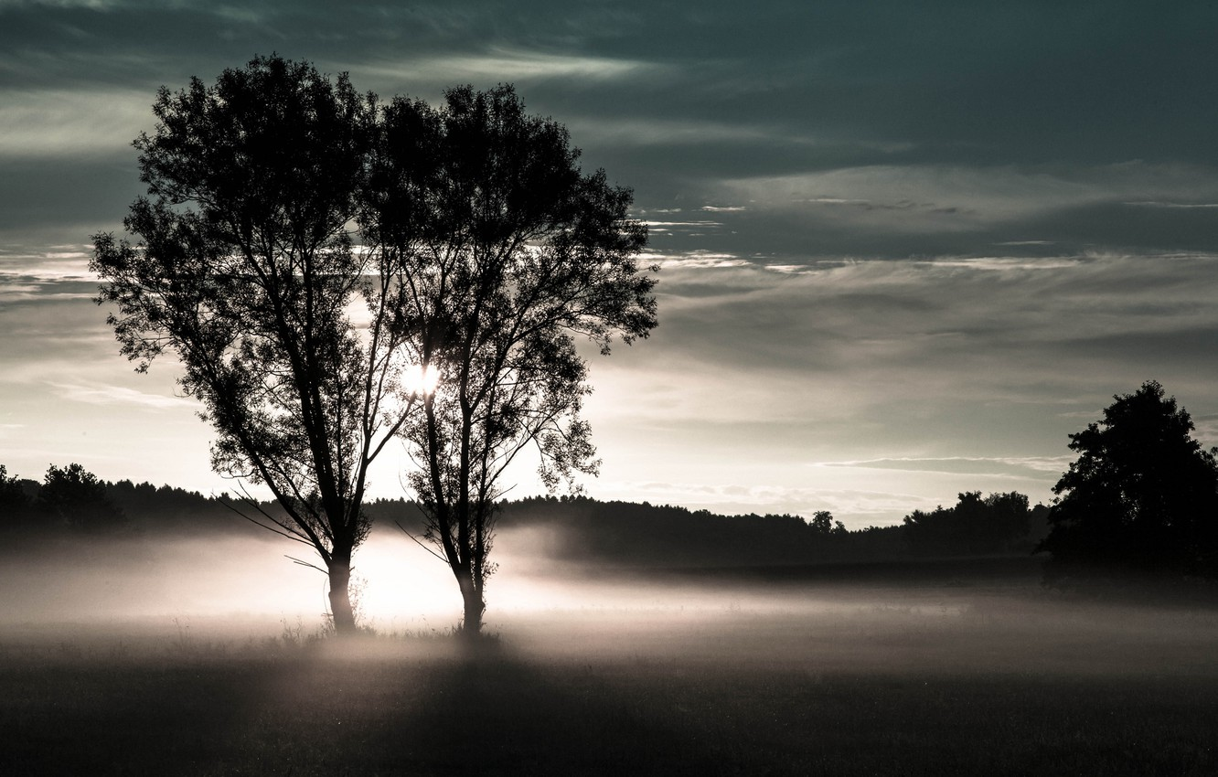 Photo wallpaper field, forest, trees, fog, two